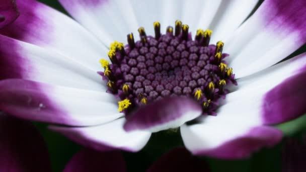 apró fehér és lila színű virágok