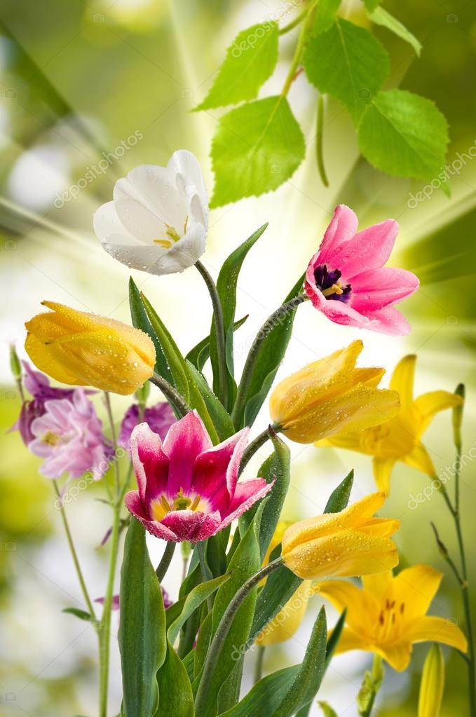 afbeelding van de mooie bloemen in de tuin close-up — stockfoto
