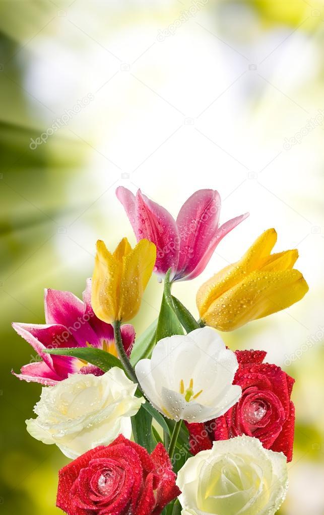imagem de flores bonitas no jardim closeup stock photo