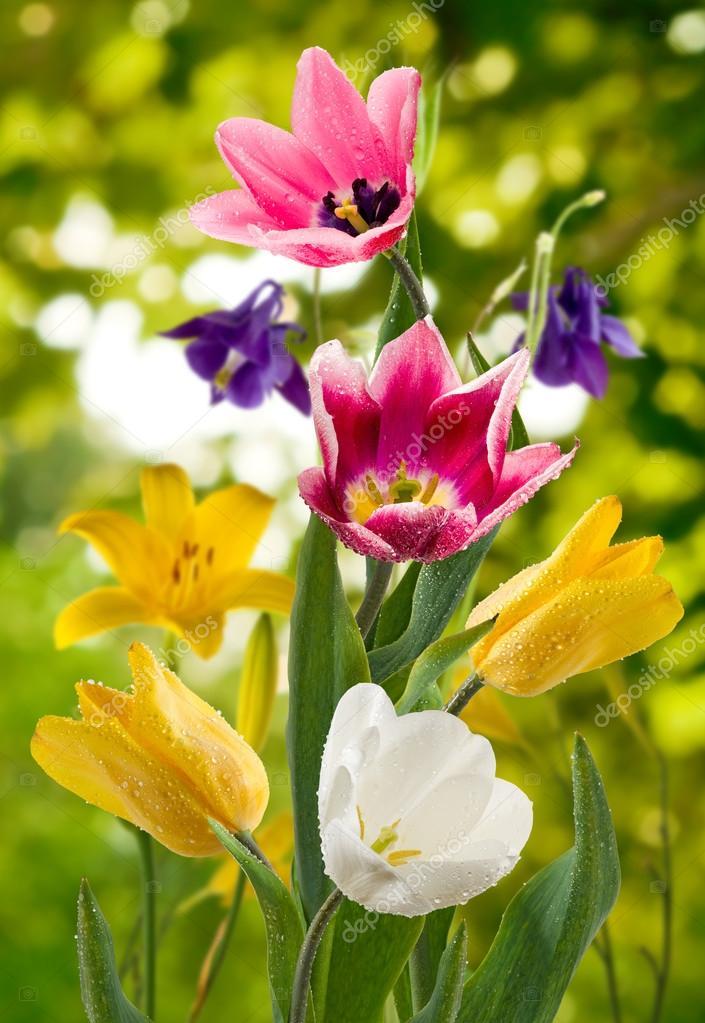 Imagem de flores bonitas no jardim closeup stock photo cooperr007 119445782 - Fotos de plantas bonitas ...