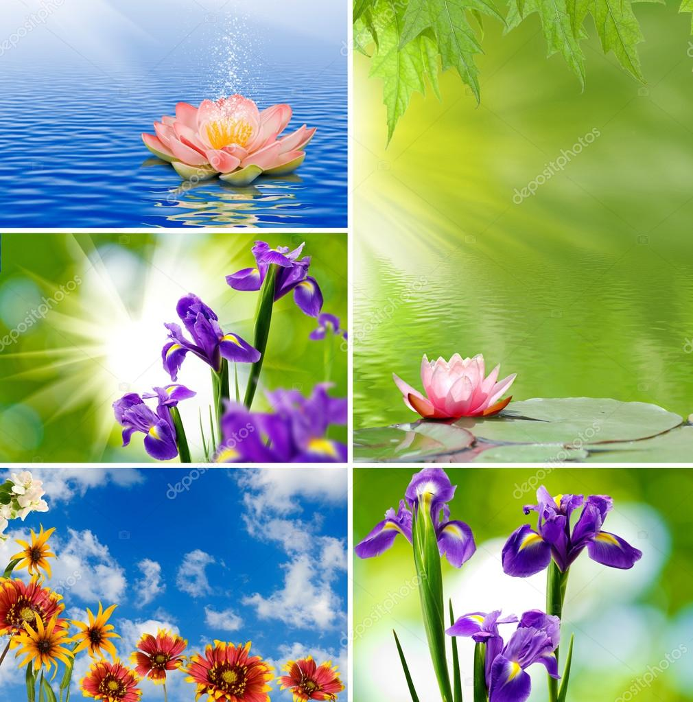 Different beautiful flowers stock photo cooperr007 58807913 different beautiful flowers stock photo izmirmasajfo