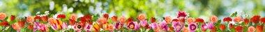 image many flowers