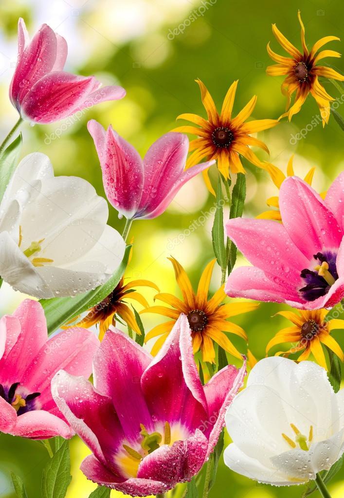 afbeelding van verschillende mooie bloemen — stockfoto © cooperr007