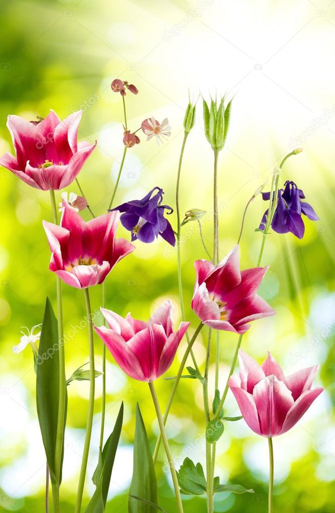 Imagem De Flores Lindas Stock Photo Cooperr007 80425214