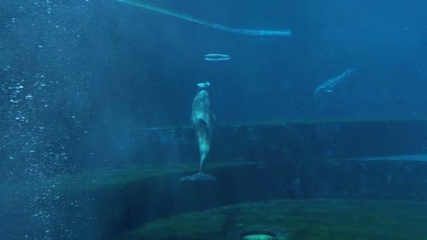 ein Delphin, der unter Wasser einen Luftring macht