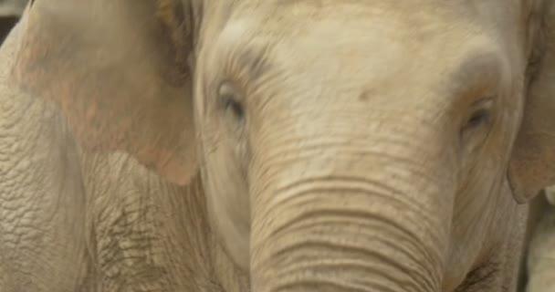 közel egy elefánt