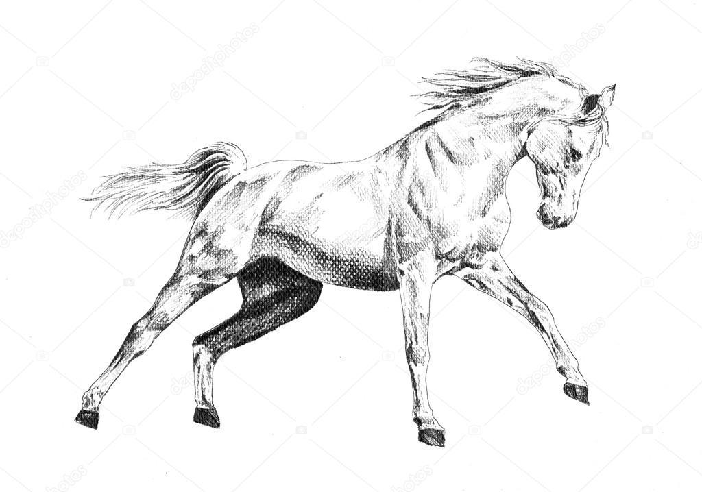 Disegno a matita testa cavallo a mano libera foto stock for Disegni di cavalli a matita