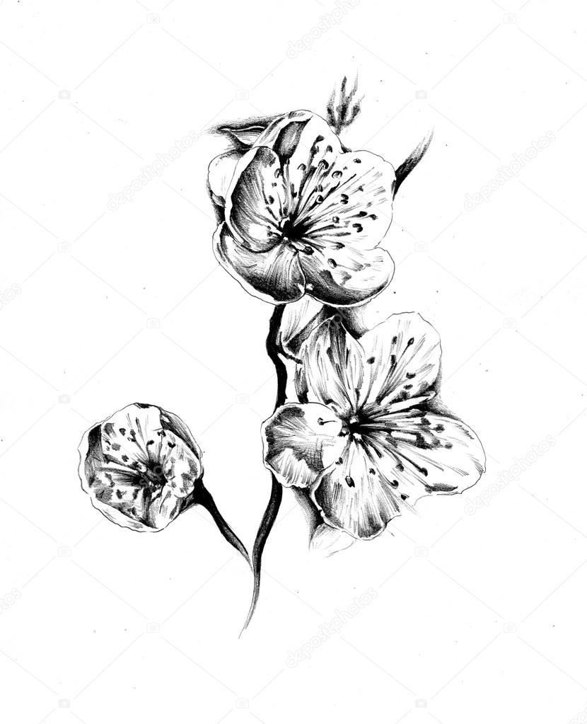 Flower Drawing Sketch Art Stock Photo C Maxtor7777 71316223