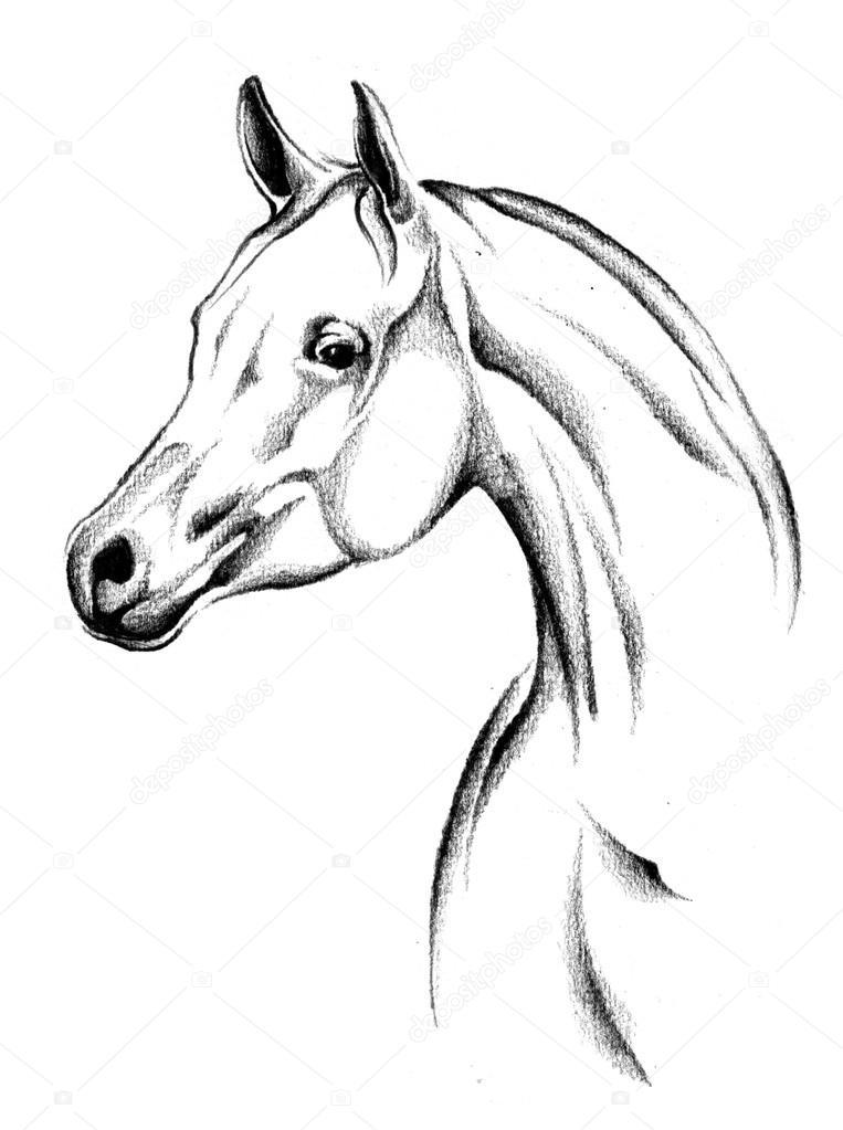 Pferde Zeichnung Skizze Kunst — Stockfoto © maxtor7777 #71316727