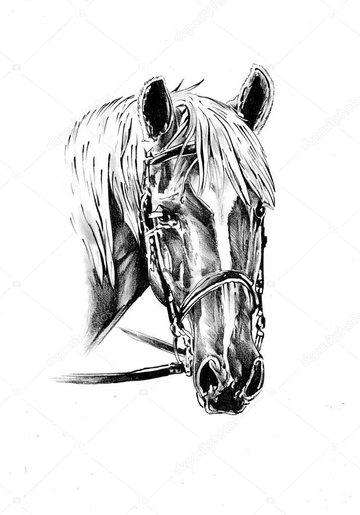 Pferde Zeichnung Skizze Kunst — Stockfoto © maxtor7777 #71316757