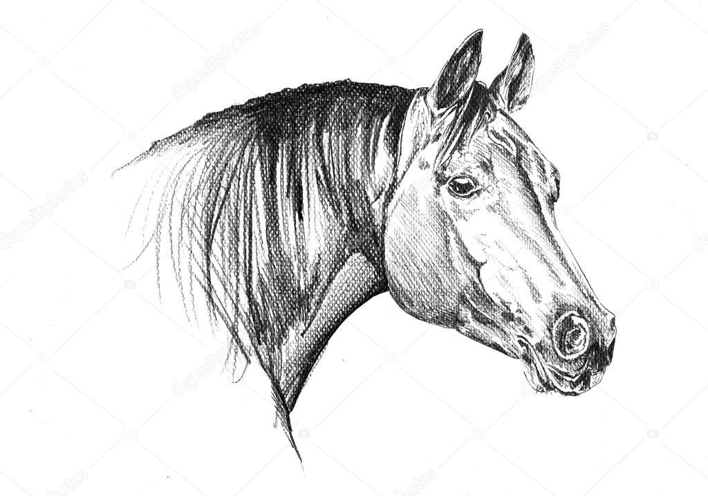 dessin au crayon  u00e0 main lev u00e9e cheval t u00eate  u2014 photographie