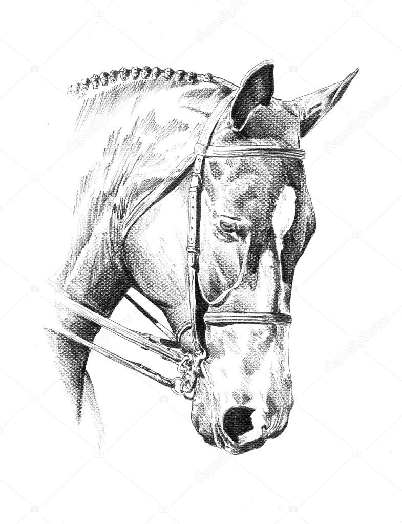 A nice freehand horse head pencil drawing photo by