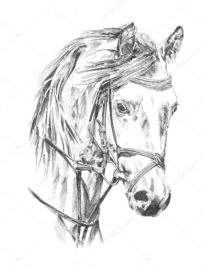 Stock Photo Freehand Horse Head Pencil Drawing on hengst