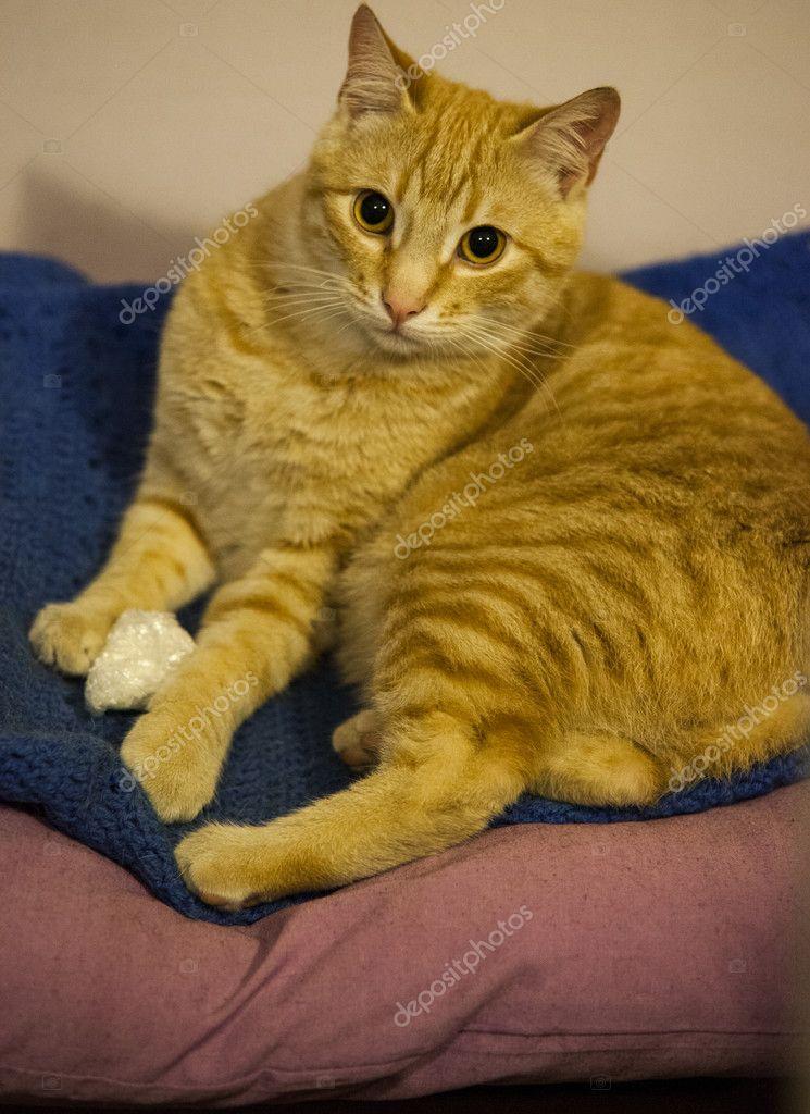CAT-GATTI-FELINE-ANIMAL