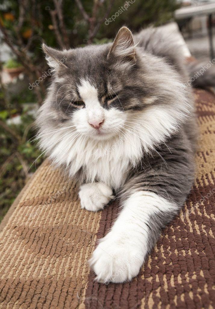 Gatti-cats-cat-feline-animal