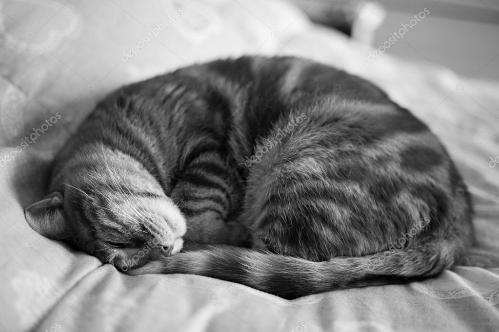 Gatti-cat-cats-animal