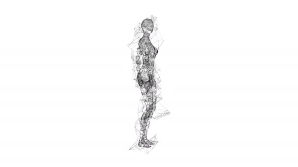 3d female or woman anatomy. Body biology medicine education concept. Wireframe low poly mesh cyberspace grid science and technology Available in 4K FullHD and HD video