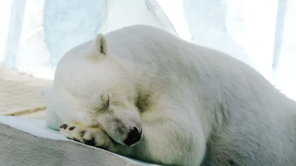 Portrait of a sleeping polar bear