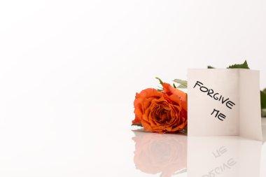 Small Forgive Me Card Beside Orange Rose