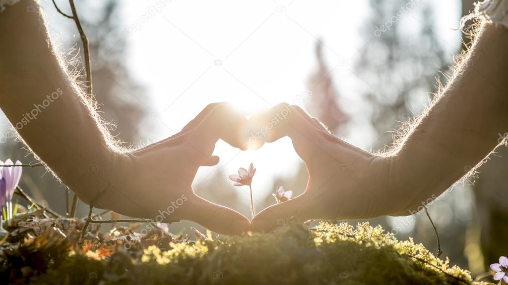 Hands Forming Heart Shape Around Small Flower