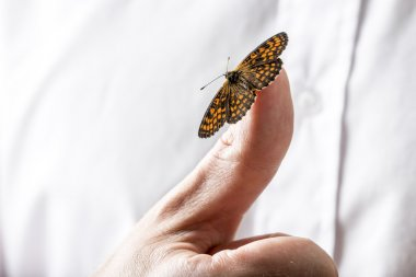 Beautiful butterfly on a businessman finger holding out his hand