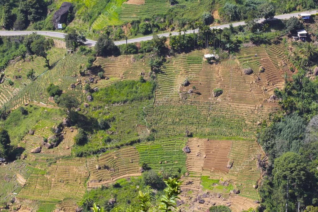 Paese della collina terrazzamenti, Sri Lanka — Foto Stock ...