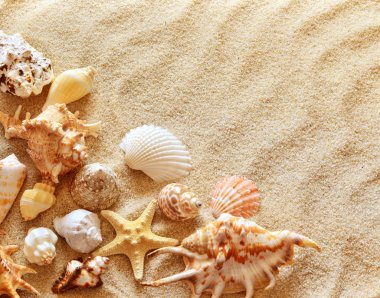 seashells with sand as background