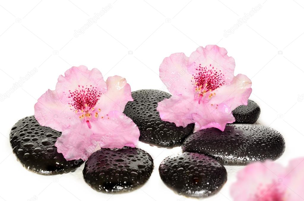 Pink flowers and black stones. Spa concept.