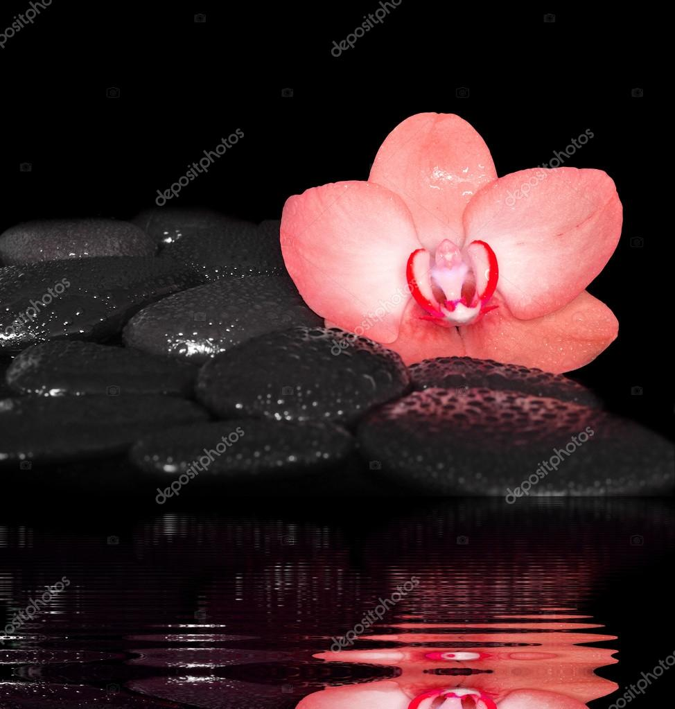 Flower red orchid and black stones. Spa concept.