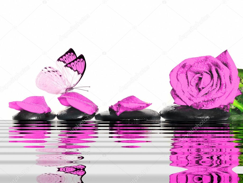 Butterfly, rose, petals and wet stones. Spa concept.