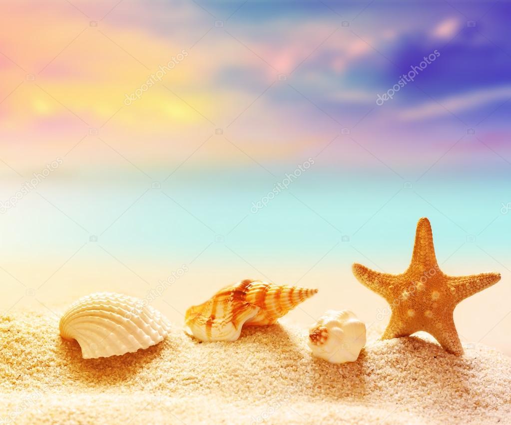 Conchiglie Con Oceano La Spiaggia E La Vista Sul Mare Foto Stock