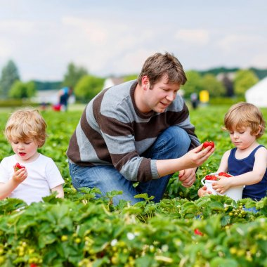 Father and two little kid boys on strawberry farm in summer
