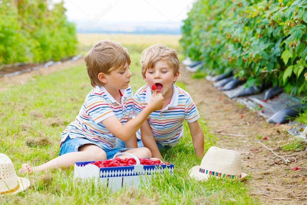 Two Little Friends Kid Boys Having Fun On Raspberry Farm Stock Photo