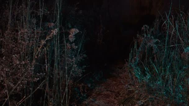 éjszakai lény mocsaras erdőben
