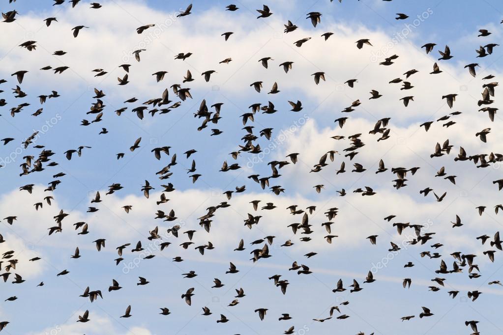 obrovské fotky ptáků
