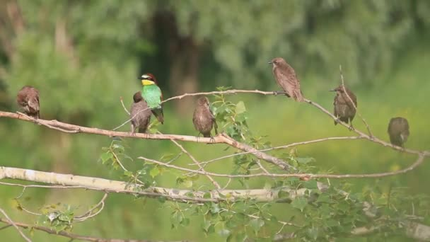 színes madár, egy csapat fekete madarak