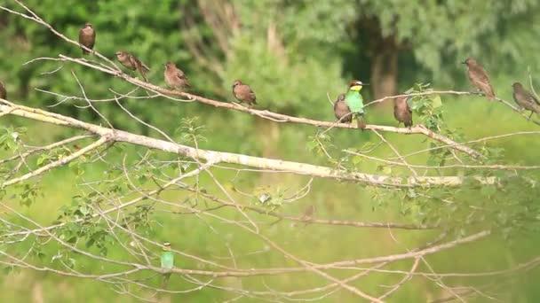 hejno různých ptáků