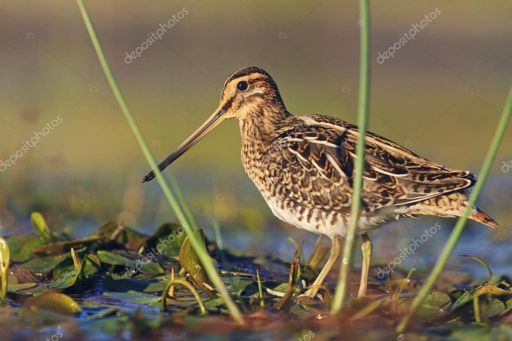 snipe at the front of the rack