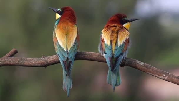 paradicsom pár színes madarak ül egy ágon