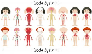 Body system of boy and girl
