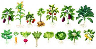 """Картина, постер, плакат, фотообои """"Многие виды овощей с листьев и корней"""", артикул 101620238"""