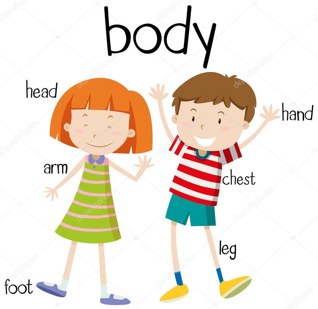Diagrama de partes del cuerpo humano — Archivo Imágenes Vectoriales ...