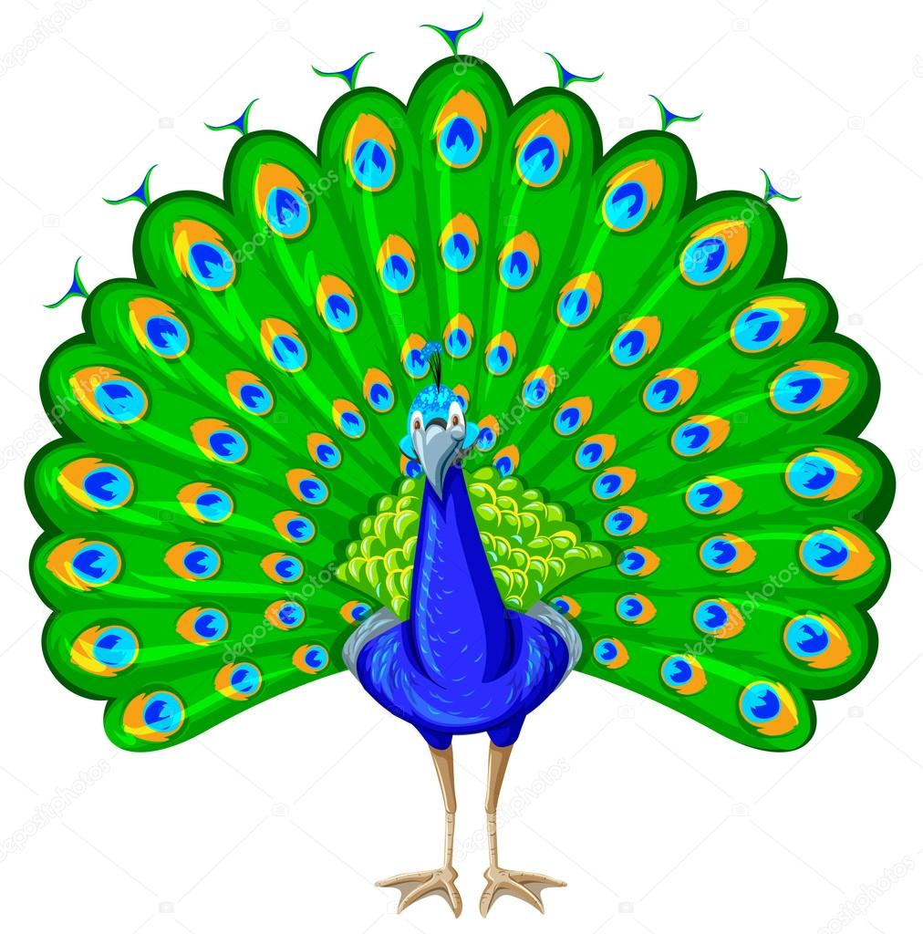 Peacock With Colorful Feather Stock Vector C Blueringmedia