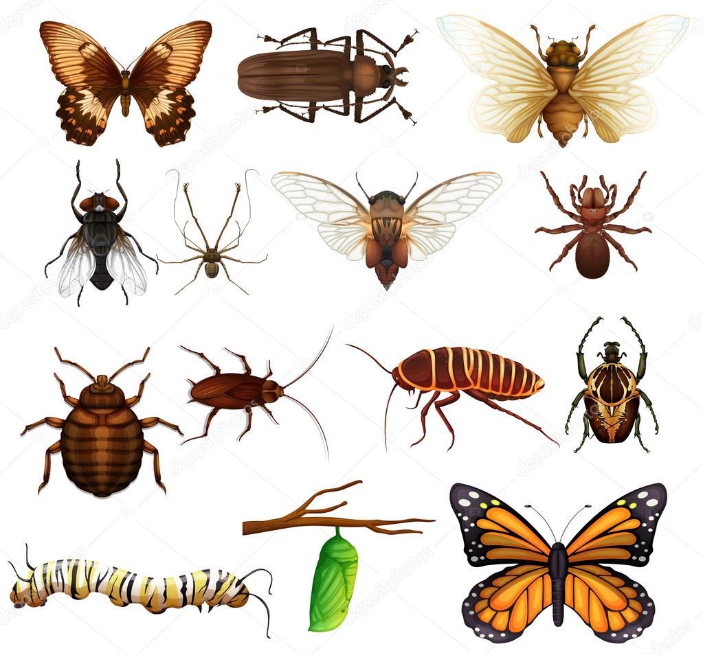 Diferentes tipos de insectos silvestres archivo im genes - Insectos en casa fotos ...