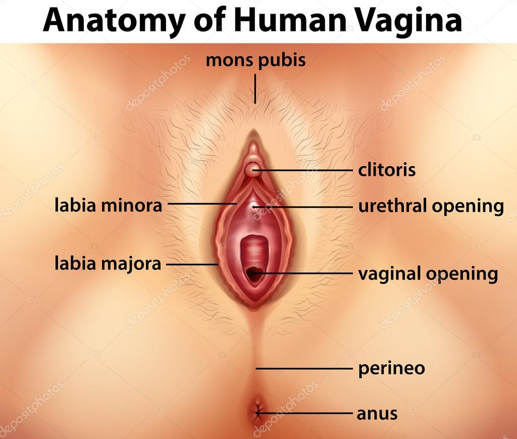Piercings diagram vagina
