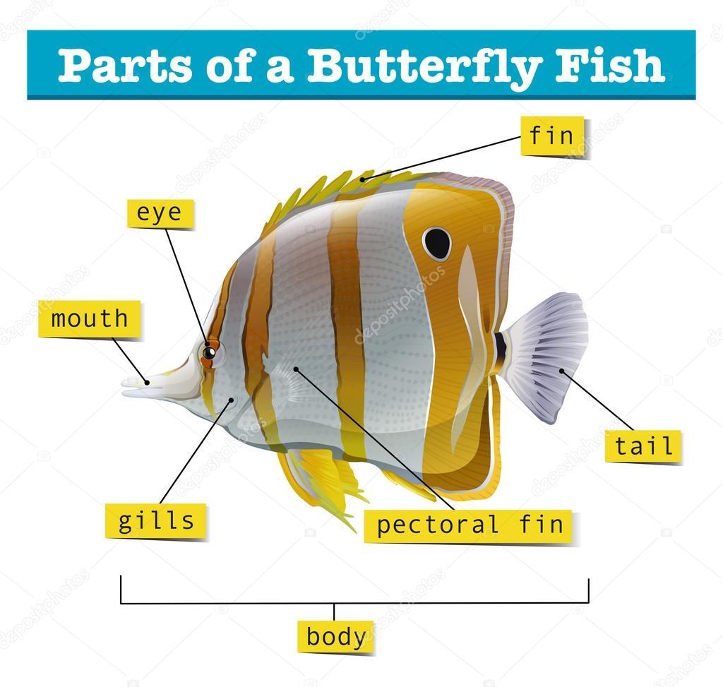 Diagrama de diferentes partes del pescado — Archivo Imágenes ...