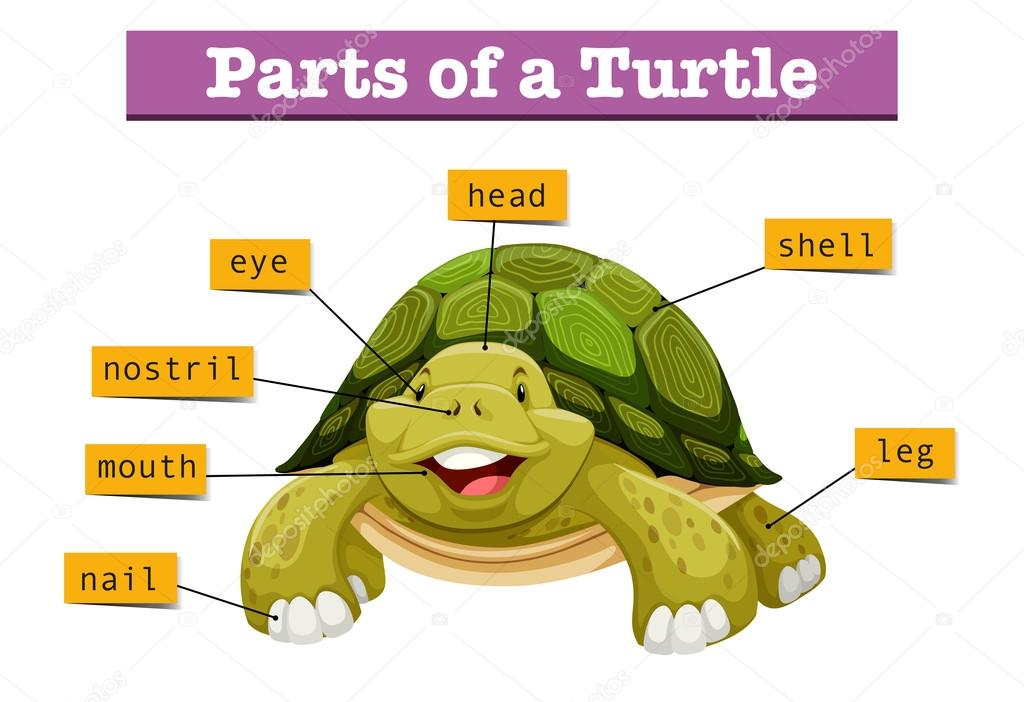 Parts Of A Turtle Diagram - Wiring Library •