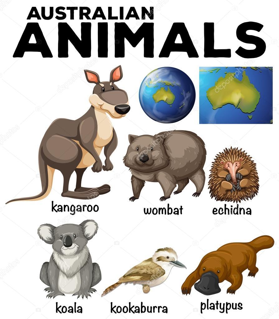 Australische Wildtiere und Australien Karte — Stockvektor ...