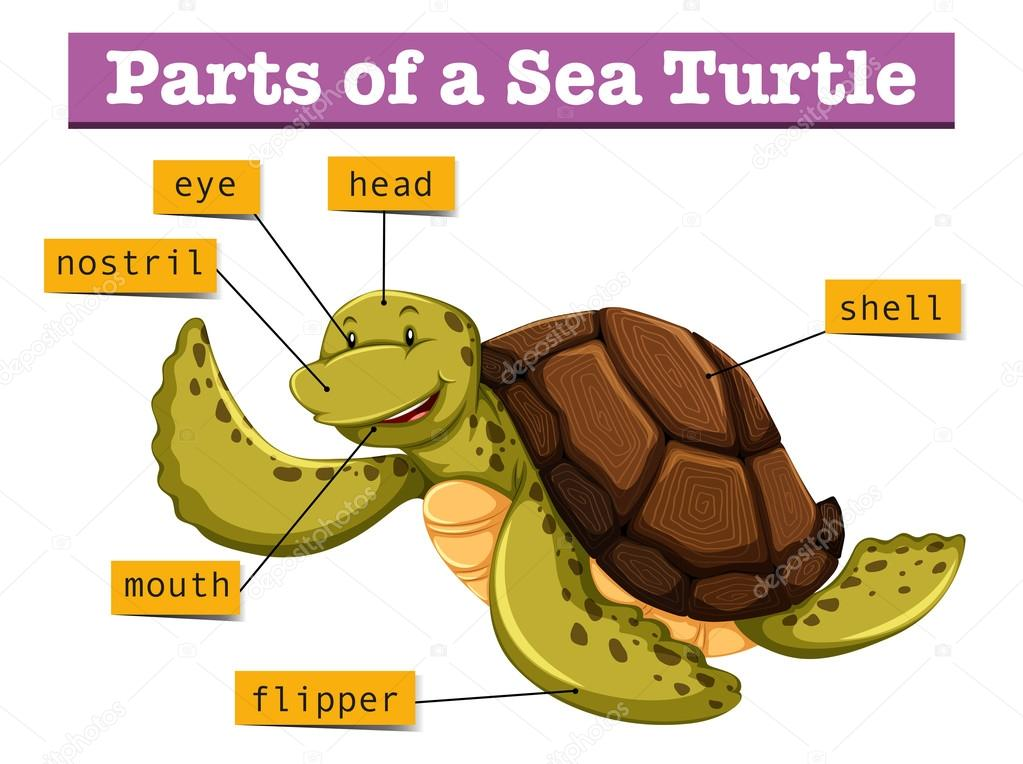Box Turtle Diagram Wiring Wiring Diagrams Instructions