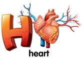 Fotografie ein Buchstabe h für Herz